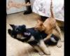 kutyaharapás szőrivel