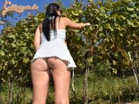 Lopott szőlő