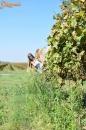 Lopott szőlő  - 1. kép