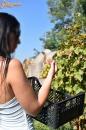 Lopott szőlő  - 3. kép