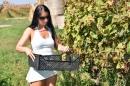 Lopott szőlő  - 6. kép