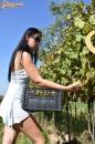 Lopott szőlő  - 10. kép