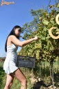 Lopott szőlő  - 11. kép