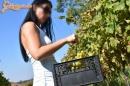 Lopott szőlő  - 12. kép