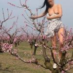 Bugyi nélkül a gyümölcsösben - 4. kép