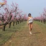 Bugyi nélkül a gyümölcsösben - 8. kép