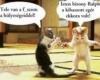 Cicák :)